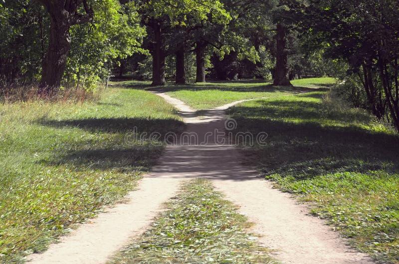 在草中的两条人行道在公园相交在一个晴朗的夏日 免版税库存照片