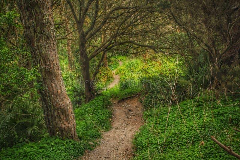 在草中的供徒步旅行的小道和树在休达,北非 库存图片