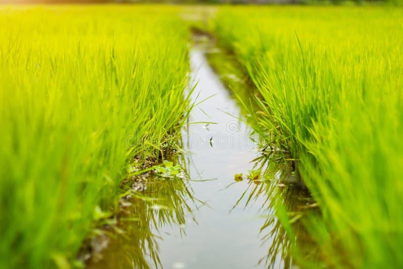 在草中间的水道路 库存照片