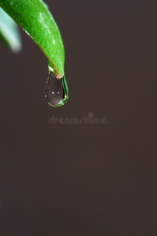 在草叶子的技巧结冰的清楚的水滴  免版税库存照片