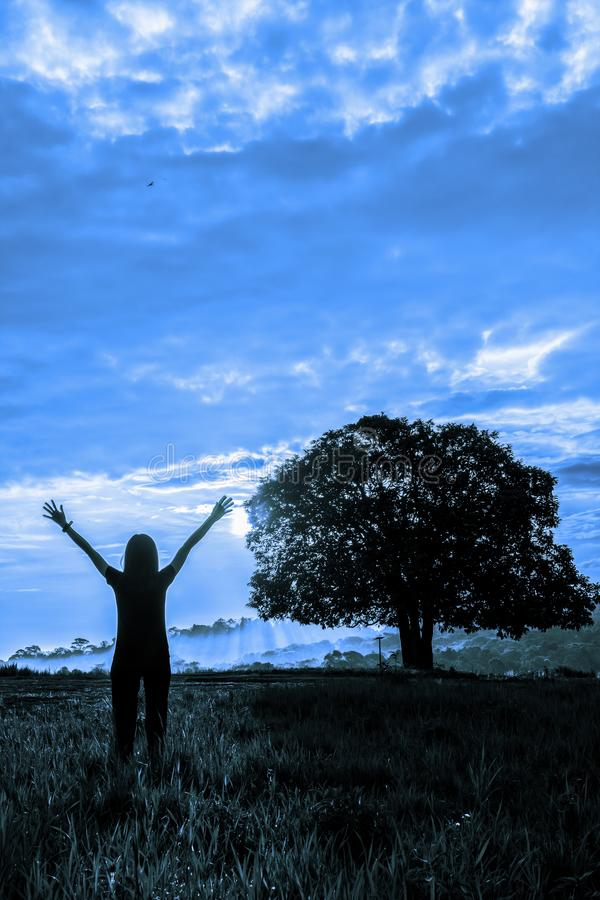 在草地的女性身分有立场单独树和日落天空背景在单音口气 库存照片