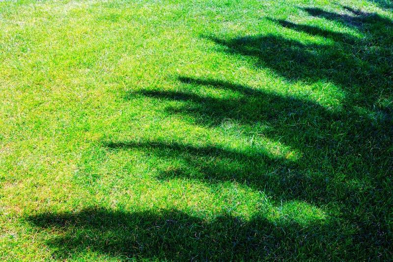 Download 在草地的树阴影 库存图片. 图片 包括有 庭院, 环境, 工厂, 叶子, 背包, 风景, 自然, 本质, 森林 - 62531427