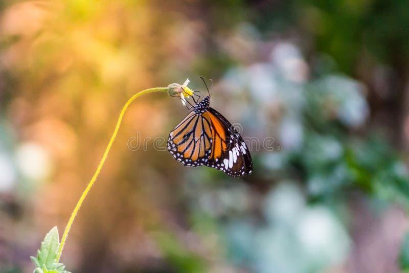 在草地的蝴蝶与温暖的光 库存图片
