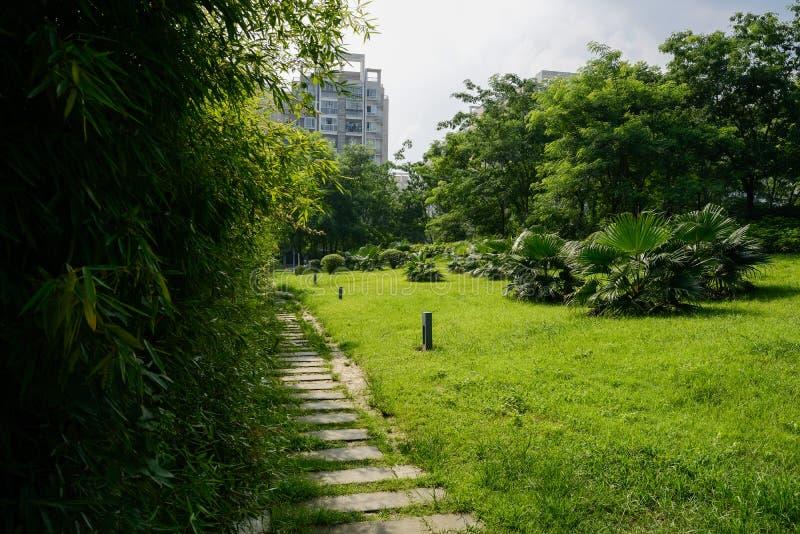 在草坪的石板道路在晴朗的夏天平均观测距离的城市大厦前 免版税库存图片