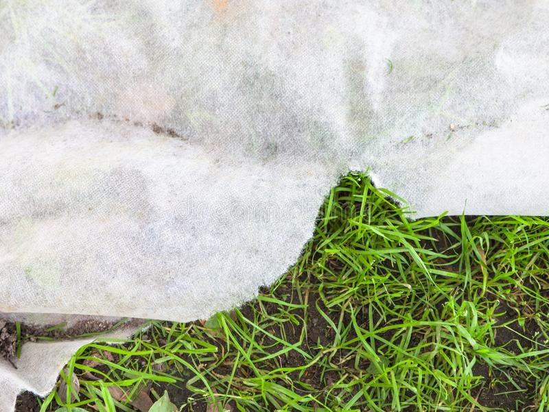 在草坪的非编织的织品覆盖树根的绿草 库存图片