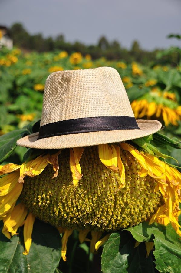 在草帽的大向日葵 免版税图库摄影