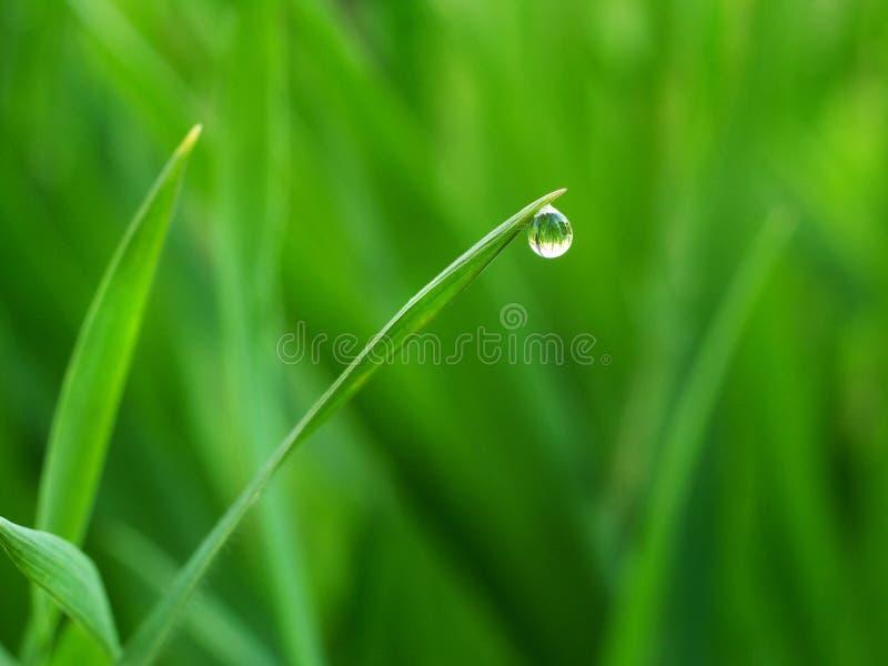 水滴在草技巧的  免版税库存图片