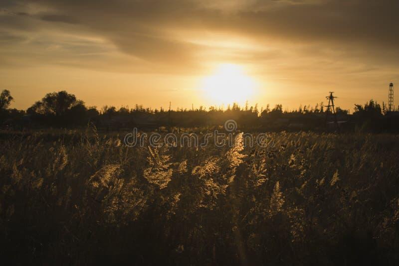在草日落光芒在金黄小时 免版税库存照片