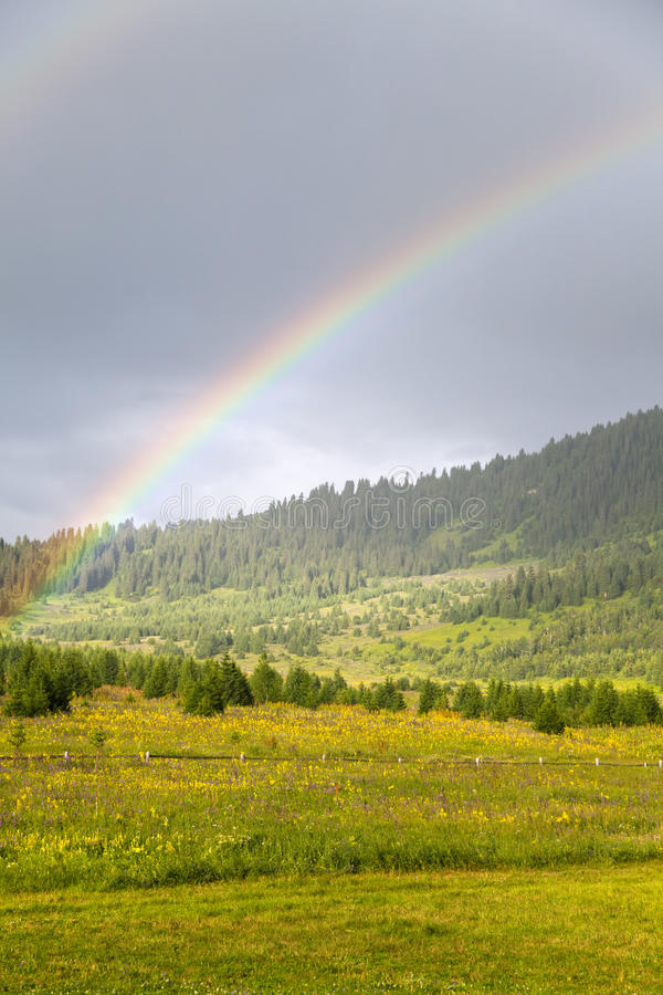 在草甸和森林的双彩虹 库存照片