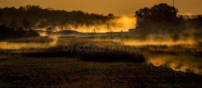 在草甸和森林的雾 库存图片