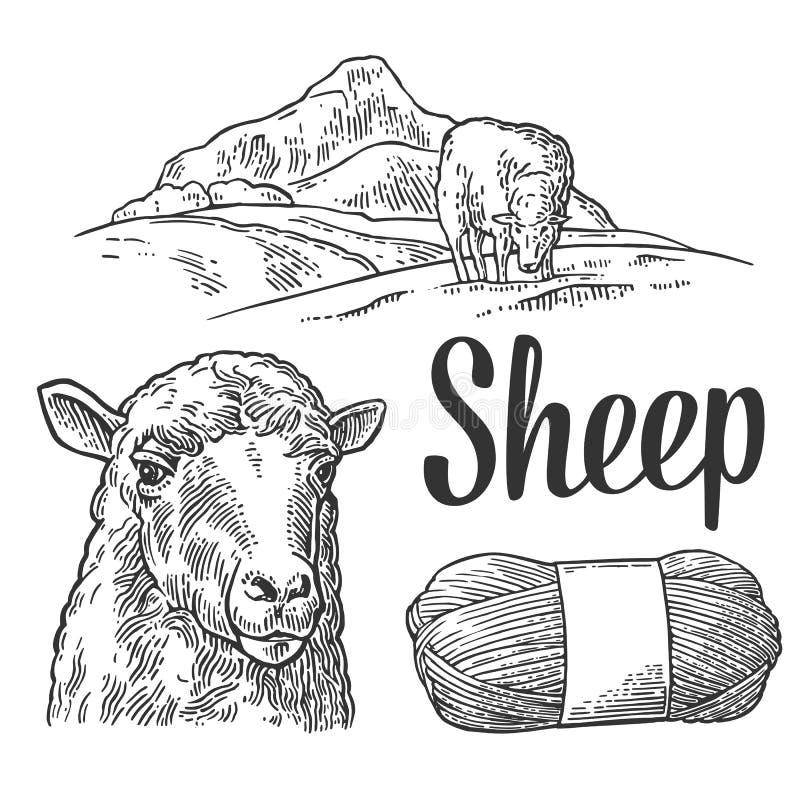 在草甸和毛线的绵羊 葡萄酒板刻例证 向量例证
