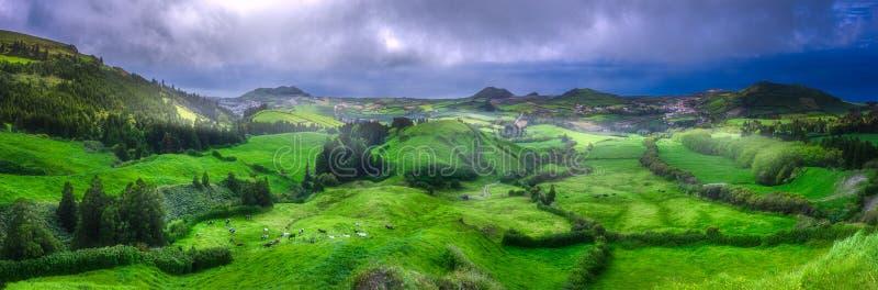 在草甸和海洋的母牛Ponta的Delgada,亚速尔群岛 免版税图库摄影