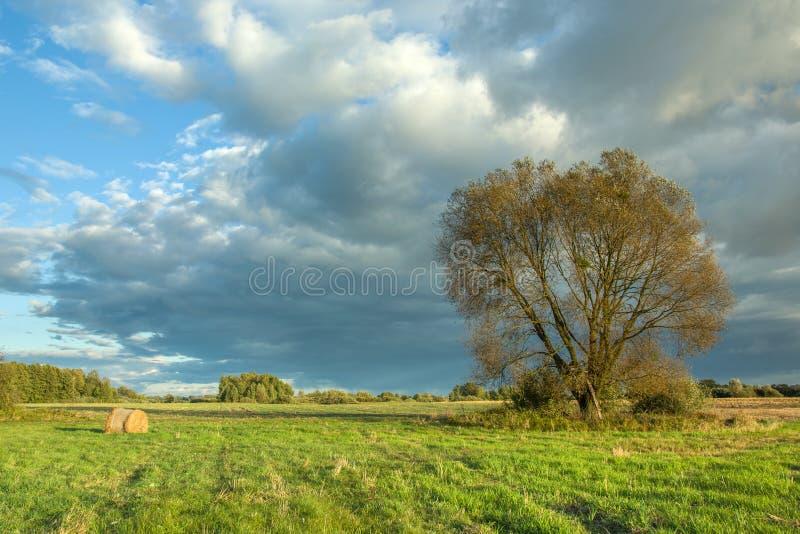 在草甸和风雨如磐的云彩的大树 库存照片