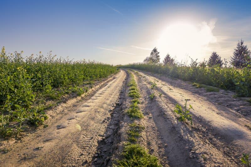 在草甸的上面的长的路 库存图片