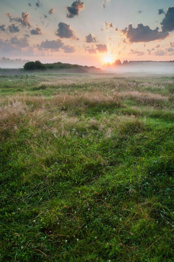 在草甸的夏天有薄雾的黎明 免版税库存图片