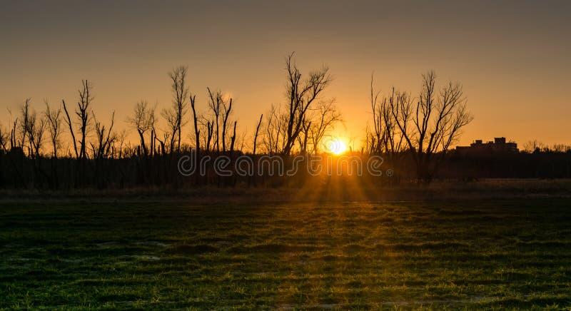在草甸的日落 免版税库存图片