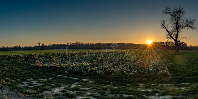在草甸的日落 库存照片