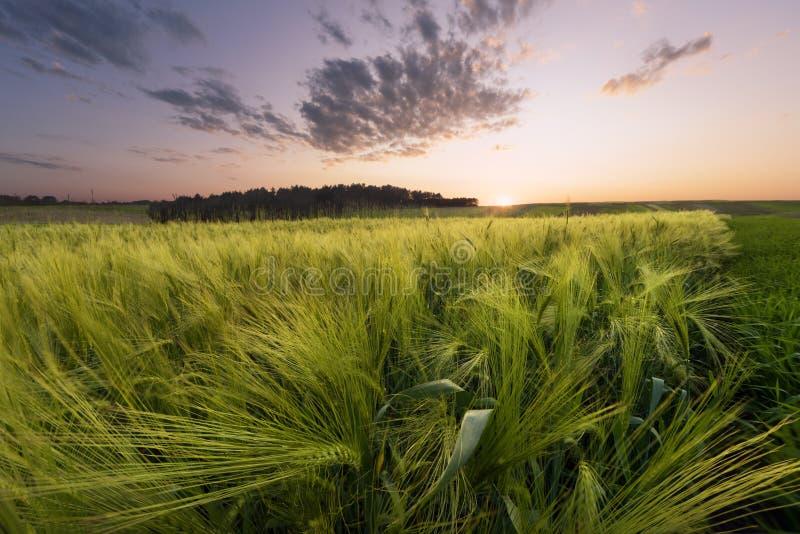 Download 在草甸的日落 库存图片. 图片 包括有 叶子, 黑麦, 地产, 天空, 地球, 室外, 背包, 环境, 日落 - 72364841