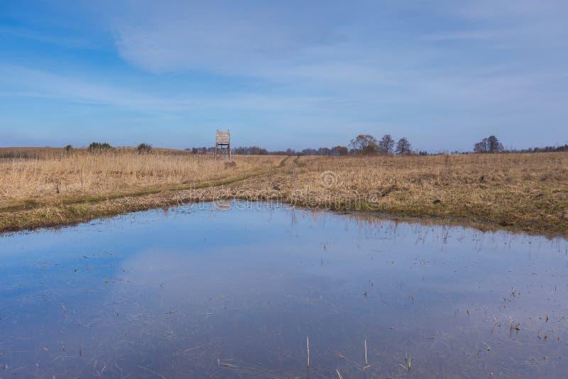 在草甸的早期的春天在沼泽地附近 免版税图库摄影