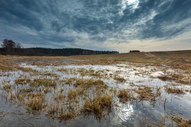 在草甸的早期的春天在沼泽地附近 库存照片