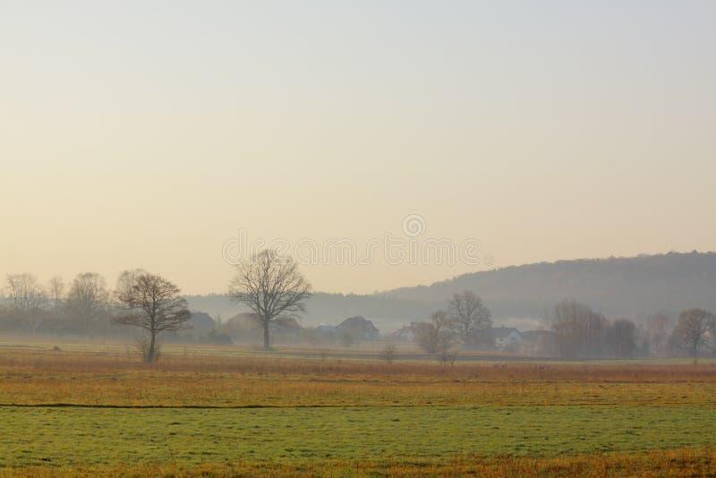 在草甸的朦胧的早晨 免版税库存照片