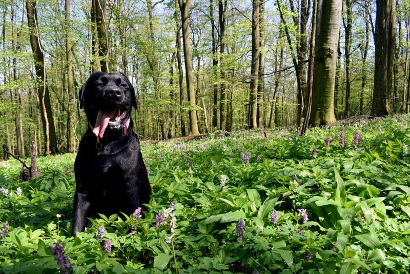 在草甸的狗 免版税图库摄影