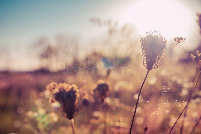 在草甸的秋天野花有阳光和蜘蛛网的 免版税库存照片