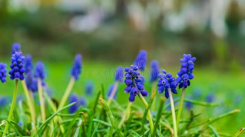 在草甸的美丽的蓝色花 免版税图库摄影