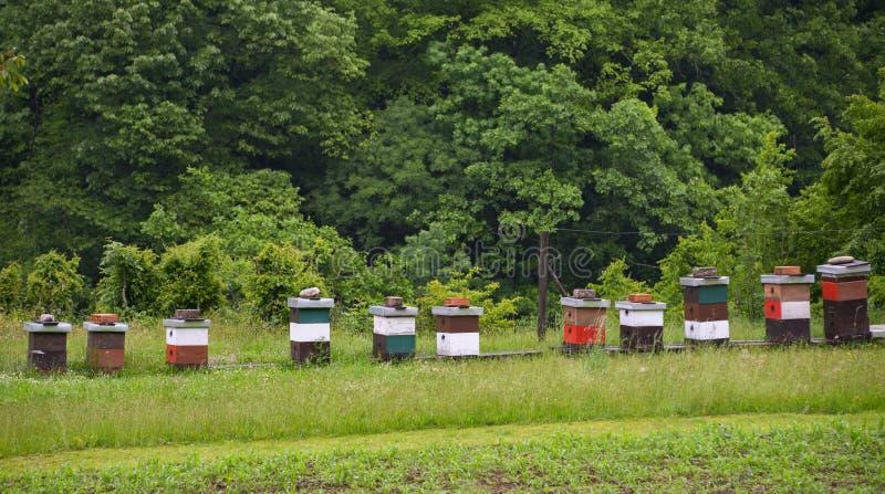 在草甸的蜂房,黑山 免版税库存图片