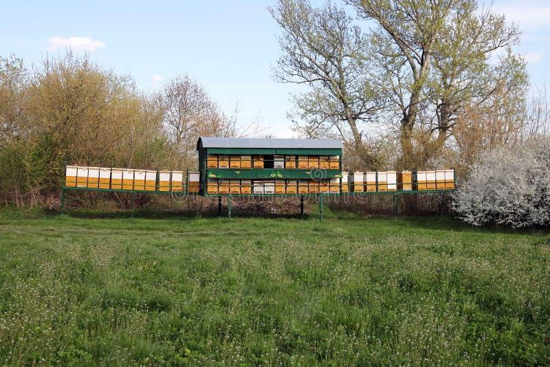 在草甸的蜂蜂房 库存图片