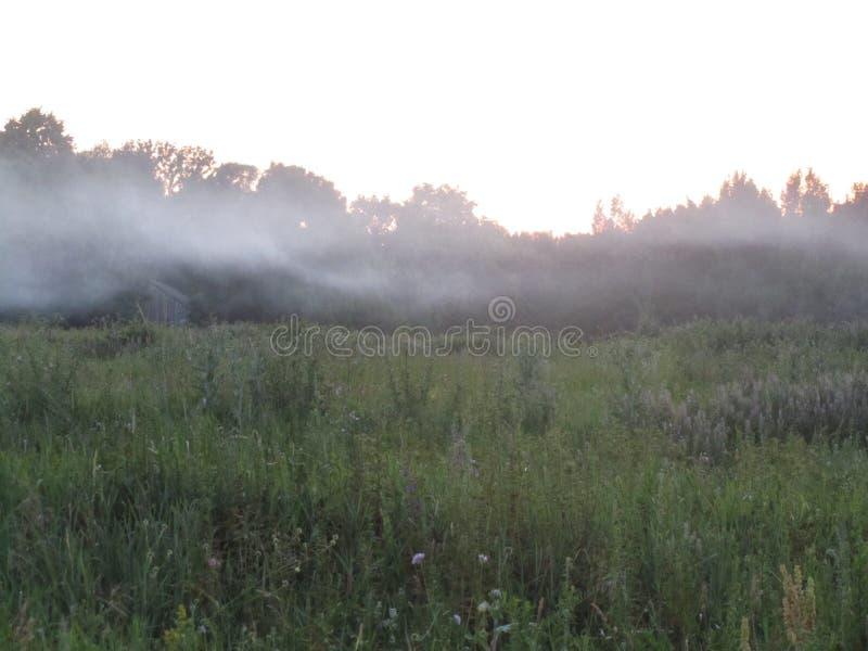 在草甸的雾 免版税图库摄影