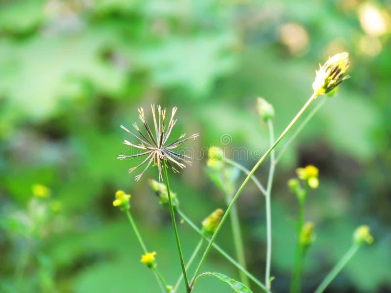 在草甸花田的干花 图库摄影
