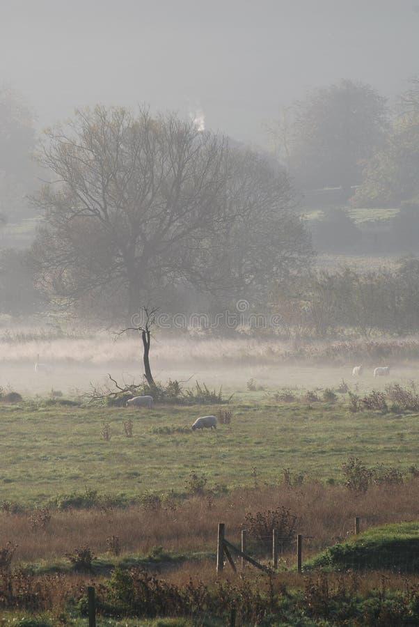 在草甸间的薄雾 免版税库存图片