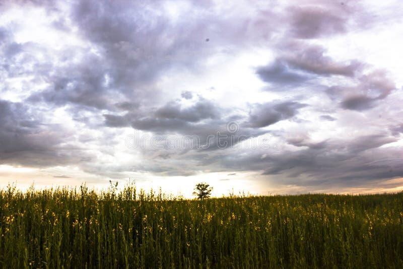 在草甸风景的意想不到的日落 与阴暗云彩的五颜六色的天空 图库摄影