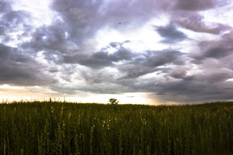 在草甸风景的意想不到的日落 与阴暗云彩的五颜六色的天空 免版税库存照片