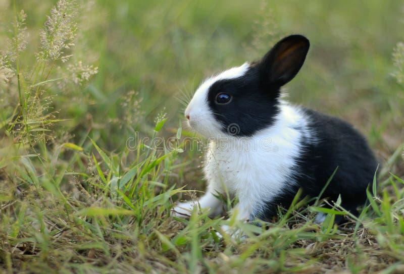 在草的一只可爱宝贝兔子 免版税库存图片