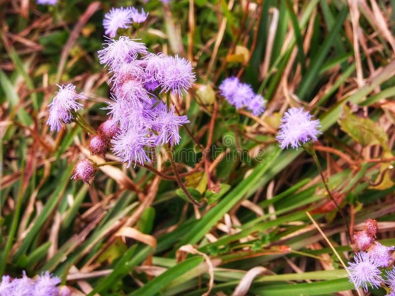 在草的一朵失去的花 图库摄影