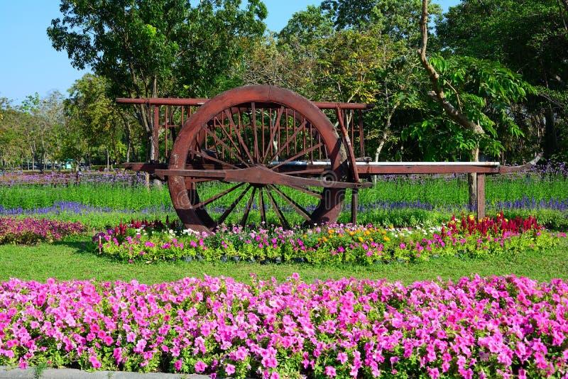 在草的古老泰国推车开花树背景 库存照片
