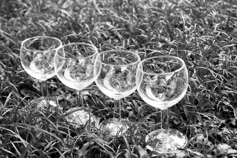 在草的四个酒杯在黑白照片 免版税库存图片