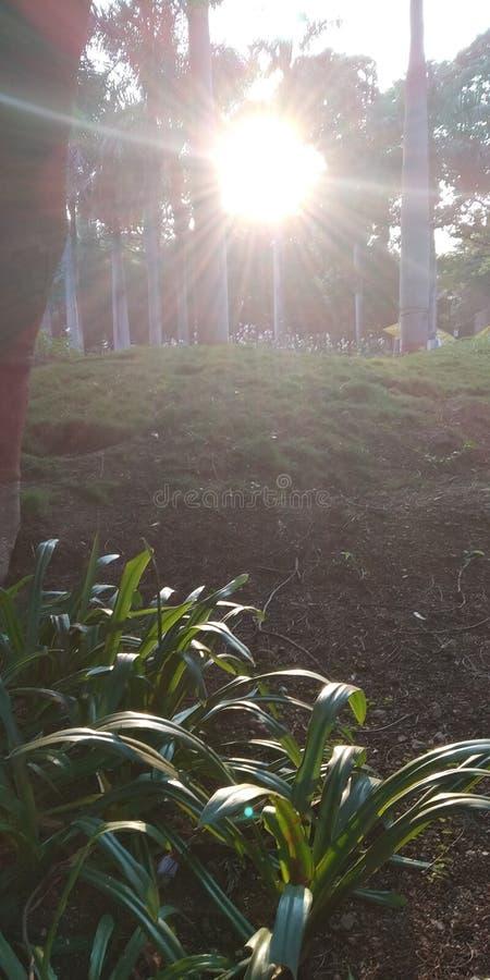 在草的太阳 库存照片