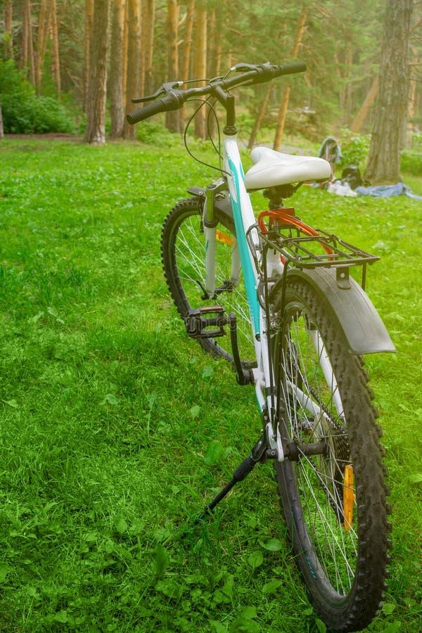 在草的女性自行车在森林野餐本质上 循环在森林或公园里 图库摄影