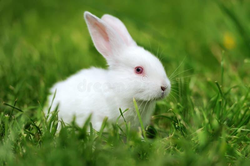 动物蜥蜴兔子800_532v动物大壁纸图片