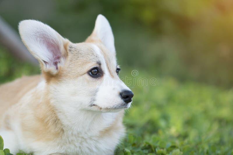 在草的小狗狗在夏天晴天 库存图片