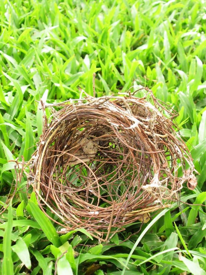 在草的巢 库存图片