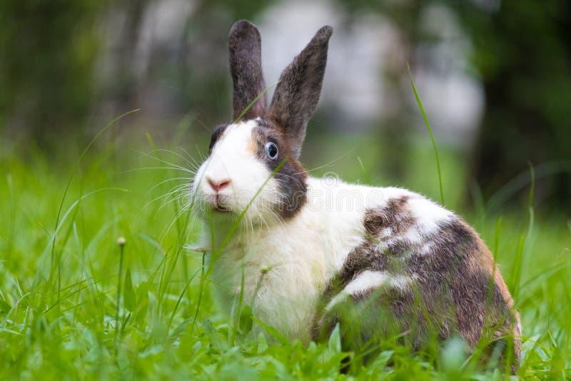 在草的愉快的兔宝宝 库存照片