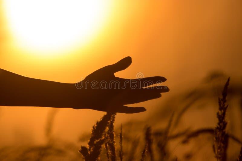 在草的手在日落光芒  免版税图库摄影