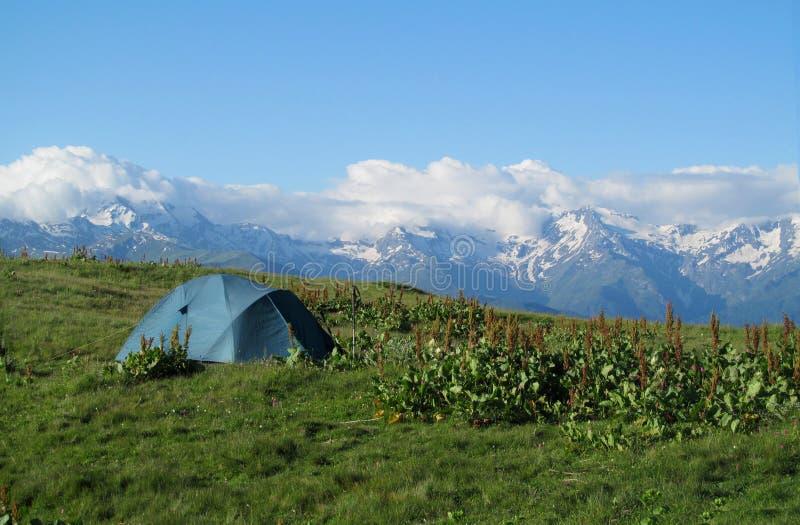 在草的旅游帐篷高在与用在背景的雪报道的美好的岩石峰顶的山 库存图片