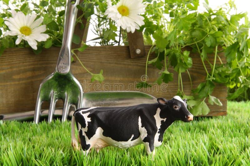 在草的春天草本和花与玩具母牛 库存图片