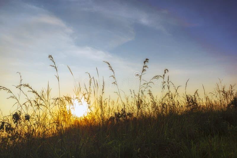 在草的有薄雾的日出 免版税库存图片
