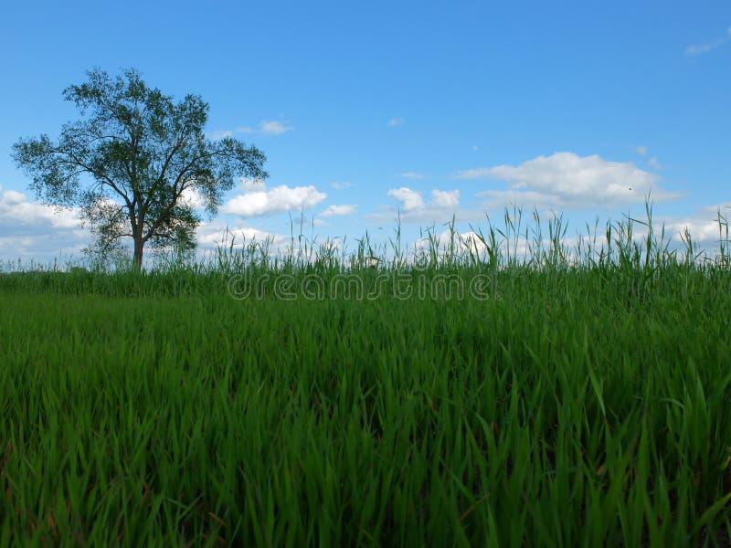 在草的树 库存照片
